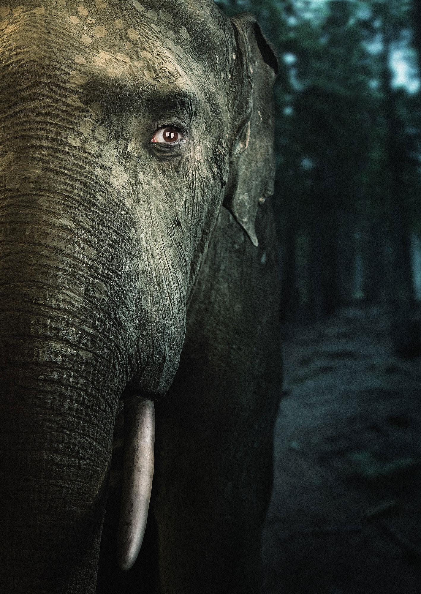 Blaupapier Tupho Arts We Are Animals Elefant